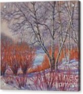 Winter Birches And Red Willows 1 Acrylic Print