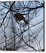 Winter Birds 2 Acrylic Print