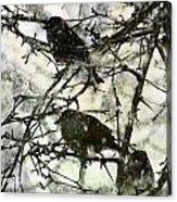 Winter Birds Acrylic Print
