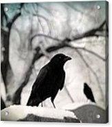 Winter Blackbirds Acrylic Print