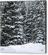 Winter Bliss Acrylic Print