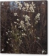 Winter Blossoms Acrylic Print
