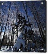 Winter Blue Acrylic Print by Karol Livote