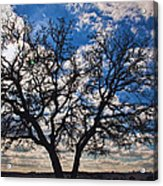 Winter Blue Skys Acrylic Print