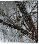 Winter Branch Acrylic Print