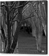 Winter Branches 1 Acrylic Print