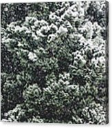 Winter Bush Acrylic Print