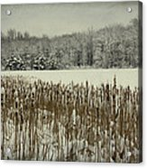 Winter By The Pond Acrylic Print