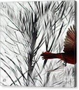 Winter Cardinal Acrylic Print