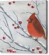 Winter Cardinal Acrylic Print by Peter Miles