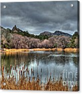 Winter Cattails By The Lake Acrylic Print