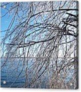 Winter Chill Acrylic Print by Margaret McDermott