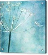 Winter Colors Acrylic Print