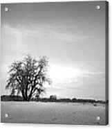 Winter Cottonwood 2 Acrylic Print