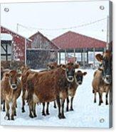 Winter Dairyland Acrylic Print