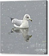 Winter Day Acrylic Print