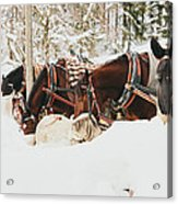 Horses Eating In Snow Acrylic Print