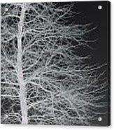 Winter Etching Acrylic Print