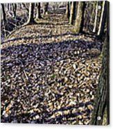 Winter Fall On The Trail Acrylic Print