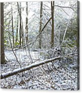 Winter Fallen Tree Acrylic Print