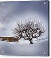 Winter Fields Acrylic Print