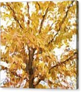 Winter Final Color Acrylic Print