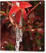 Winter Flower Acrylic Print