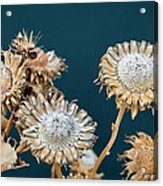 Winter Flowers Acrylic Print
