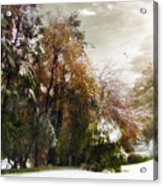 Winter Foliage Acrylic Print