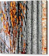 Winter Foliage Tin 13134 Acrylic Print
