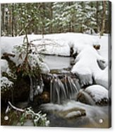 Winter Forest - Lincoln New Hampshire Usa Acrylic Print