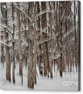 Winter Forest Abstract II Acrylic Print