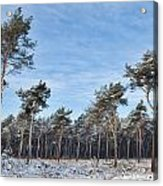 Winter Forest Covered With Snow Acrylic Print