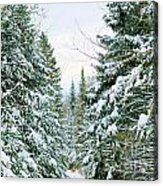 Winter Forest Landscape Acrylic Print