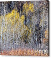 Winter Forest Landscape With Bare Trees Acrylic Print
