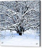 Winter Fresh Acrylic Print