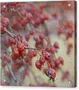Winter Fruit Acrylic Print