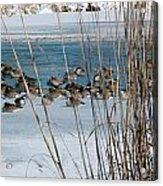 Winter Geese - 04 Acrylic Print
