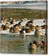 Winter Geese - 06 Acrylic Print