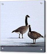 Winter Geese Acrylic Print