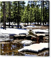 Winter Gives Way To Spring 32626 Acrylic Print