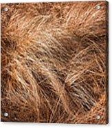 Winter Grass Acrylic Print