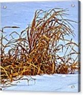 Winter Grasses II Acrylic Print