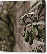 Winter Green Acrylic Print