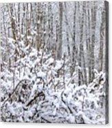 Winter Haven 2 Acrylic Print