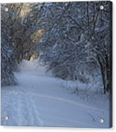 Winter Hike Acrylic Print by Andrew Pacheco