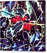 Winter Holly Acrylic Print