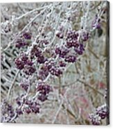 Winter In Lila Acrylic Print
