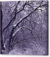 Winter In Purple Acrylic Print