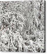 Winter In The Heartland 12 Acrylic Print